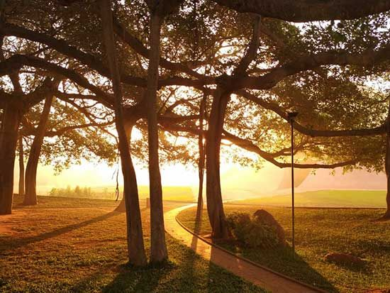 Sunrise under the banyan tree (photo Manohar)