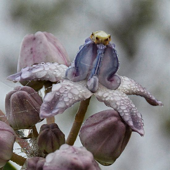 "Surprising nature... ""Courage"" flower (photo: Sven)"